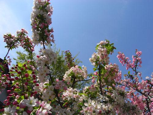 blog-119 ハナミズキ2010-5.jpg