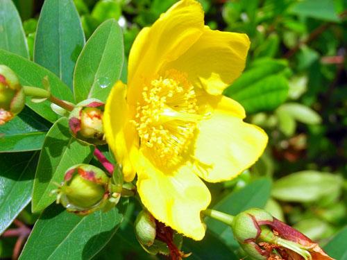 blog-157 黄色い花-1.jpg