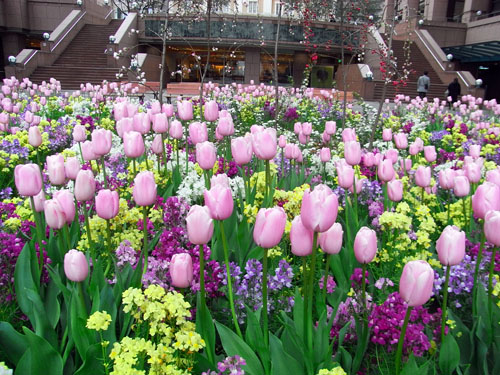 blog-211 ガーデンプレイスの花壇-1.jpg