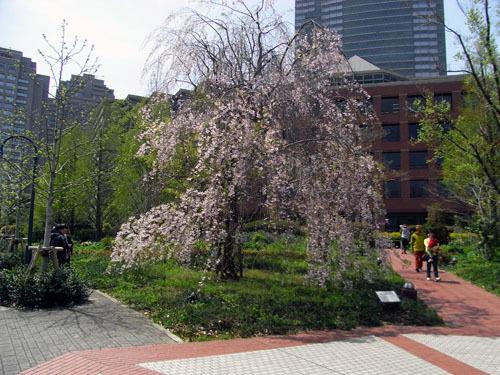 blog-216 ガーデンしだれ桜-1.jpg