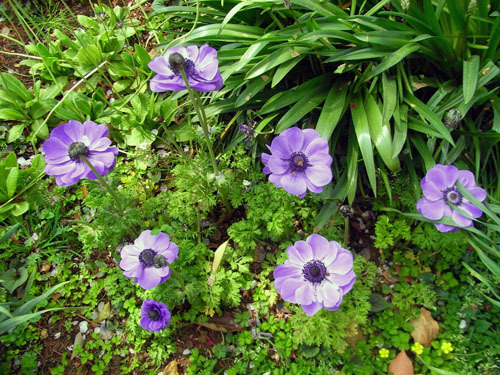 blog-218 ガーデンの花-1.jpg