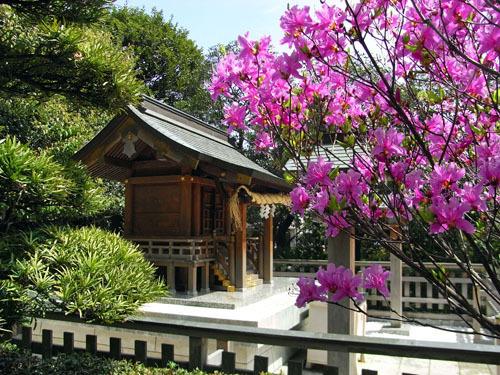 blog-220 恵比寿神社とムラサキツツジ.jpg
