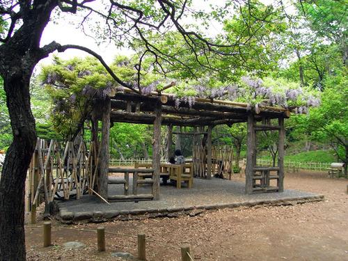 blog-226 有栖川の藤棚-1.jpg