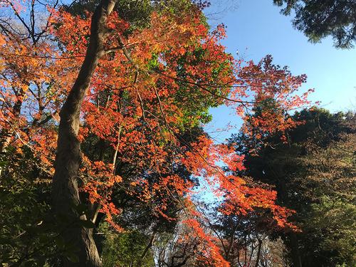 blog-307有栖川公園の紅葉-1.jpg