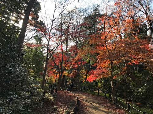 blog-308有栖川公園の紅葉-2.jpg