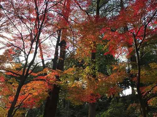 blog-309有栖川公園の紅葉-3.jpg