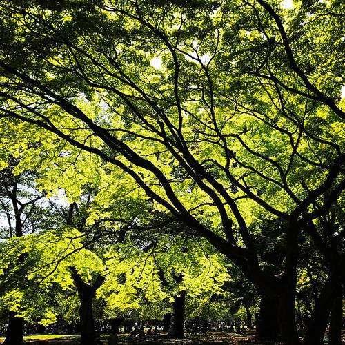 blog-340新緑は盛る陽射しを蒼く染め.jpg