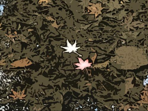 水面に紅葉2枚-1.jpg